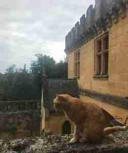 Cat perched on a chateau wall in the Dordogne, France
