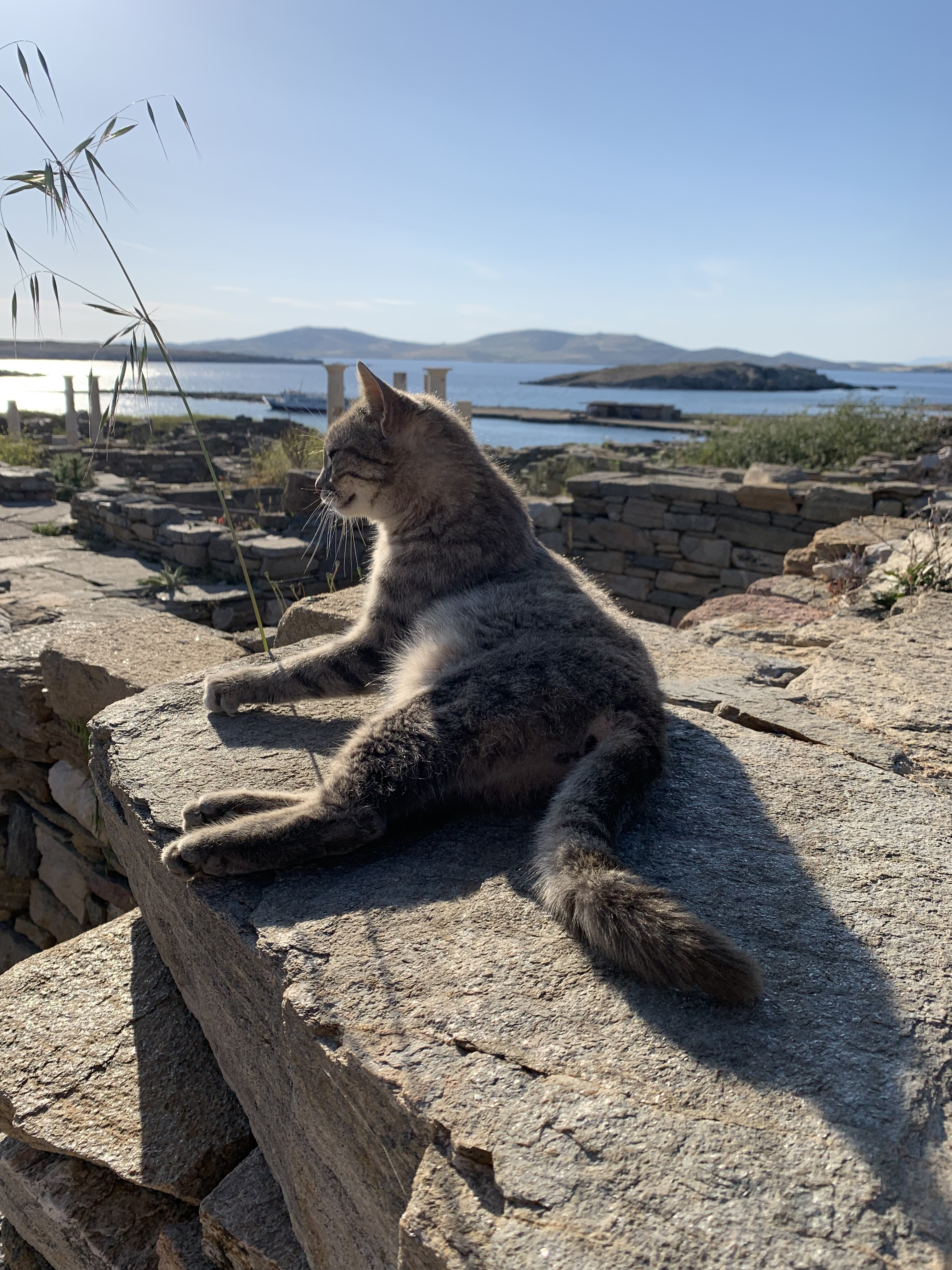 Greek island of Delos with a cat in the ancient ruins