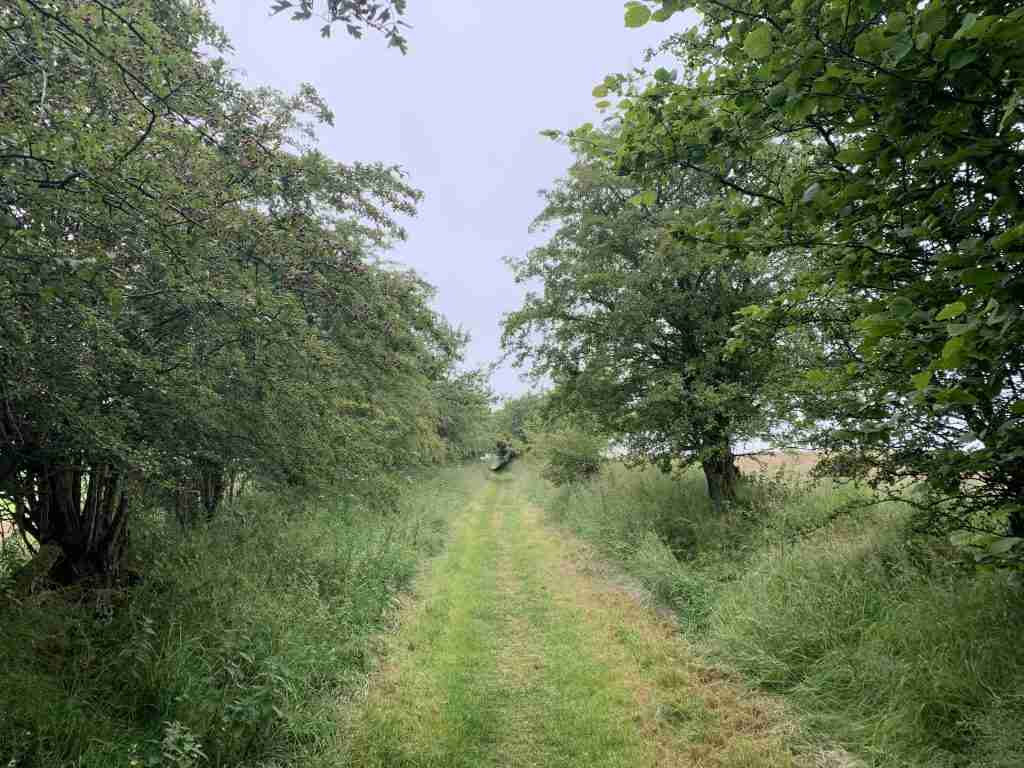 a trail on the Hadrian's Wall walk in a field with trees