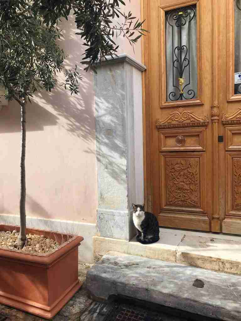 A stray cat against a Neoclassical mansion in the Plaka area of Athens Greece