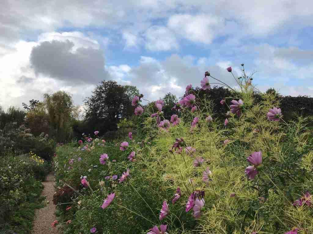 a field of purple flowers in Claude Monet's garden in Giverny France