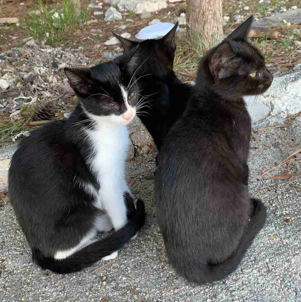Three skeptical-looking kittens on a beach in Split, Croatia.